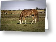 Chestnut In The Pasture Greeting Card