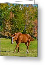 Chestnut Red Horse Greeting Card