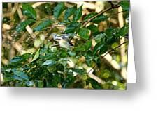 Chestnut-sided In Sprinkler Greeting Card
