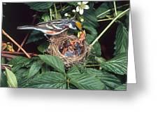 Chestnut-sided Warbler At Nest Greeting Card