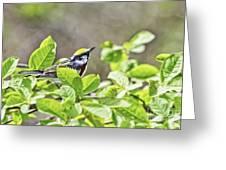 Chestnut Sided Warbler Greeting Card