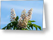 Chestnut Tree Blossoms - Featured 2 Greeting Card
