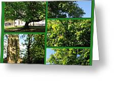 Chestnut Trees At Christchurch Greeting Card