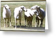 Cheviot Sheep 2 Greeting Card