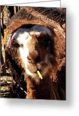 Chewing Llama Greeting Card