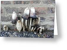 Chicago Alley Shrooms Greeting Card