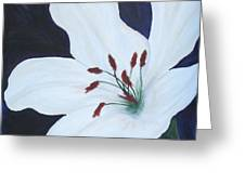 Chicago Snow White Lusterlily Greeting Card