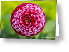 Chick A Dee Dahlia Greeting Card