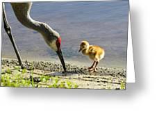 Chick At The Lake Greeting Card