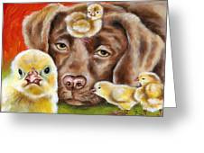 Chick Sitting Afternoon Greeting Card