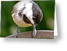 Chickadee 103 Greeting Card