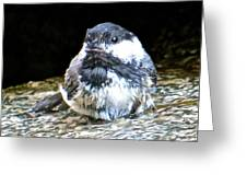 Chickadee 109 Greeting Card