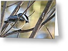 Chickadee 115 Greeting Card