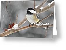 Chickadee 117 Greeting Card