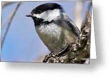 Chickadee At Carson Nature Center Greeting Card