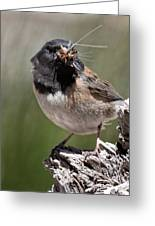 Chickadee Bringing Lunch To The Kids Greeting Card