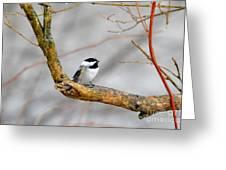 Chickadee In Rain Greeting Card