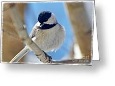 Chickadee On A Bright Day  Greeting Card