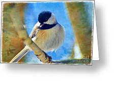 Chickadee On A Bright Day -digital Paint I Greeting Card