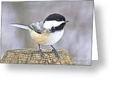 Chickadee On A Used To Be Tree Greeting Card