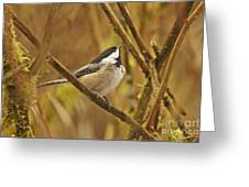 Chickadee On Alert Greeting Card