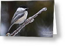 Chickadee Pictures 228 Greeting Card