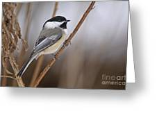 Chickadee Pictures 316 Greeting Card