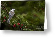 Chickadee Pictures 373 Greeting Card
