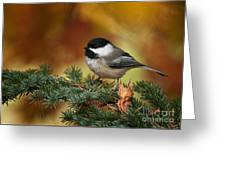 Chickadee Pictures 375 Greeting Card