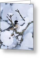 Chickadee Pictures 507 Greeting Card
