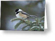 Chickadee Pictures 521 Greeting Card