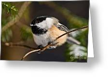 Chickadee Pictures 561 Greeting Card