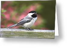Chickadee Song Greeting Card