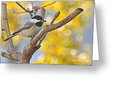 Chickadee With His Prize Greeting Card