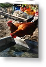 Chicken A La Carte Greeting Card