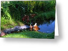 Chicken By The Pond Greeting Card