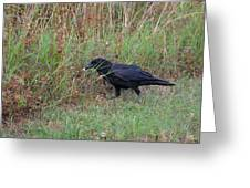 Chicken Eating Crow Greeting Card
