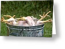 Chicken Feet Greeting Card