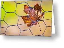 Chicken Wire Leaf. Greeting Card