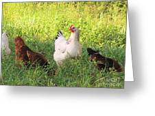 Chickens In Tall Grass Greeting Card