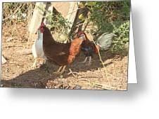 Chickens In The Pin Greeting Card