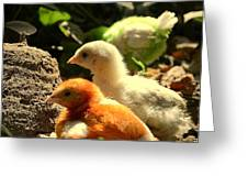 Cute Chicks Greeting Card