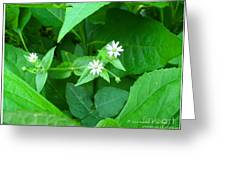 Chickweed Trio Greeting Card