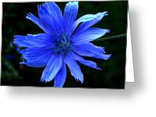 Chicory 2 Greeting Card