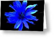 Chicory 3 Greeting Card by Mark Malitz