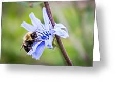 Chicory Bee Greeting Card