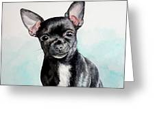 Chihuahua Black Greeting Card
