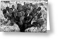 Chihuahua Desert Cactus Bw Greeting Card