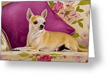 Chihuahua II Greeting Card