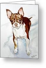 Chihuahua White Chocolate Color. Greeting Card